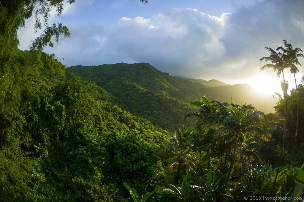 El Yunque National Forest Puerto Rico day trip
